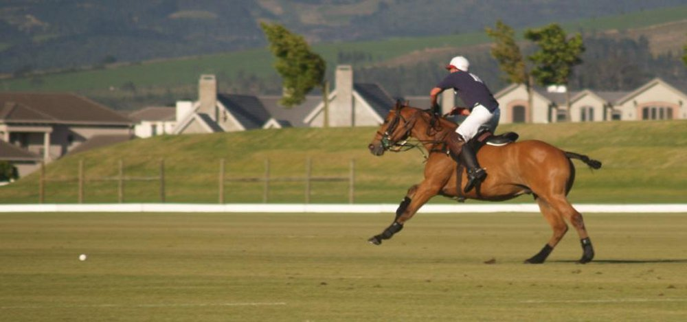 Polo training tips