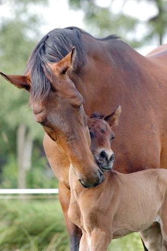 Healthy horse breeding