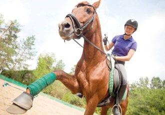 Equine rehabilitation: Back to work