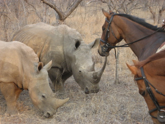 Want to be a horse safari guide?