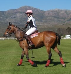 Leg protection for Polo ponies