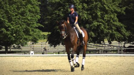 Dressage – In Pursuit of Perfection
