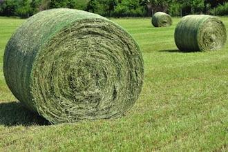 Tips for choosing good grass