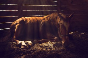 Studies of horses stabled alone