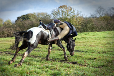 The seedy side of horse sales