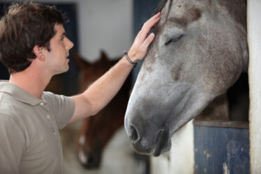 Horses can 'see' human emotions