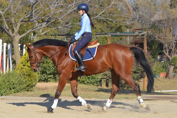 Dressage for the showjumping horse