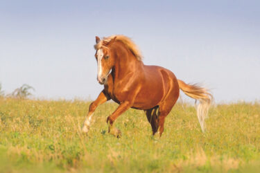 Top tips for mane and tail care