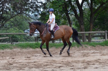Creating a better canter