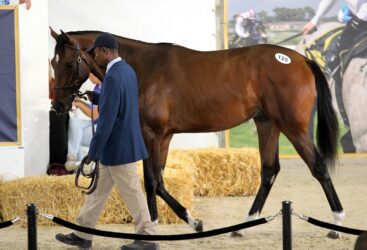 Cape racehorse prices drop by 45% at annual auction