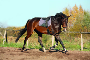 Part One: Make the most of lunging