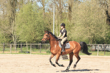 What is the maximum weight that a recreational horse can carry?