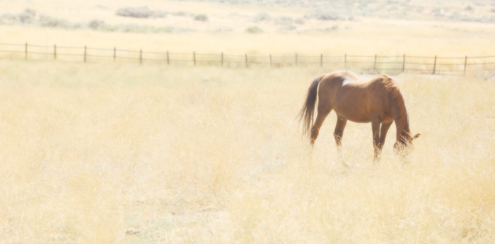 How do I know when it's time for my horse to retire?