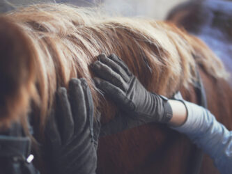 Do horses really not have feeling in their mane?