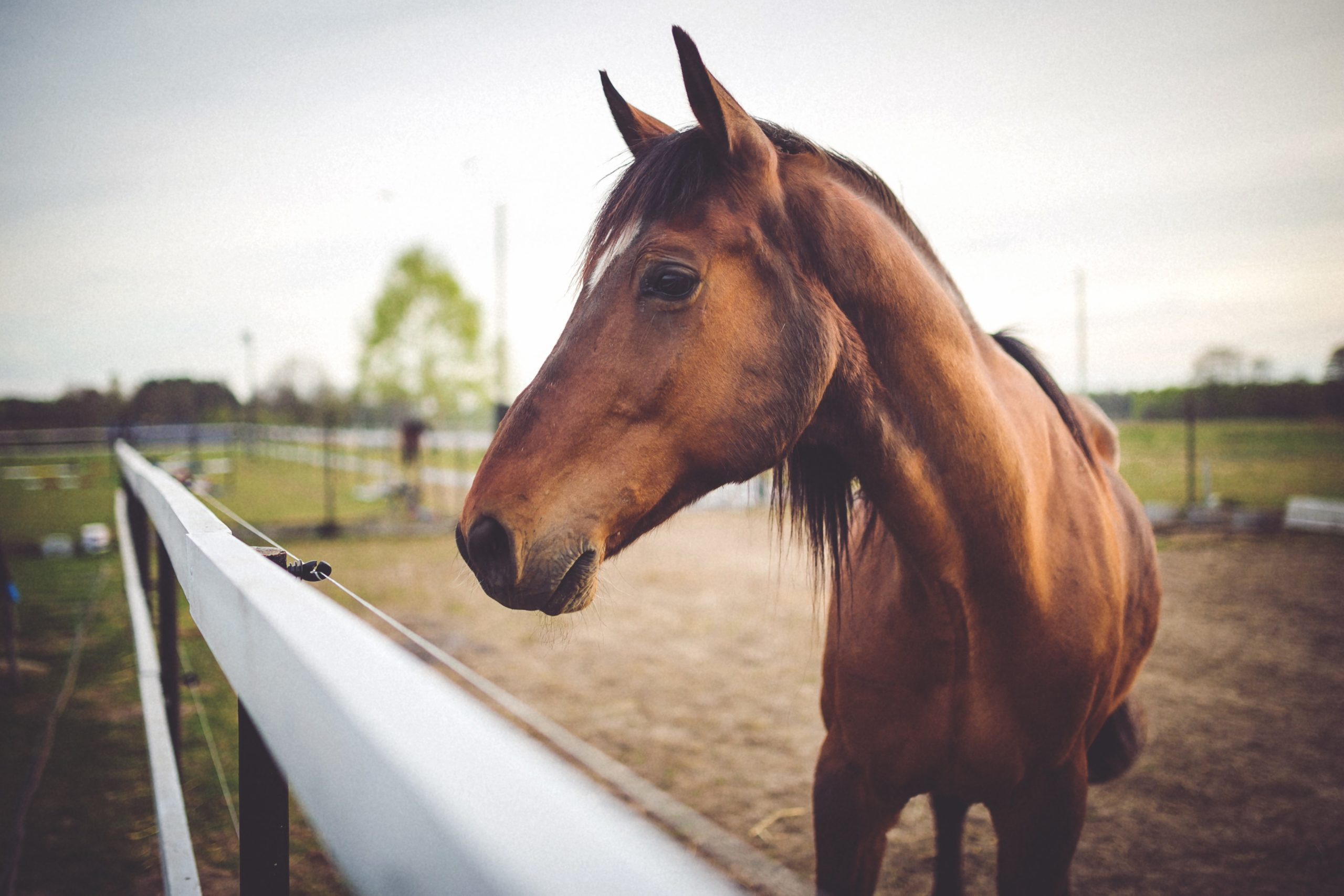 What is a good way to teach a horse the flying change?