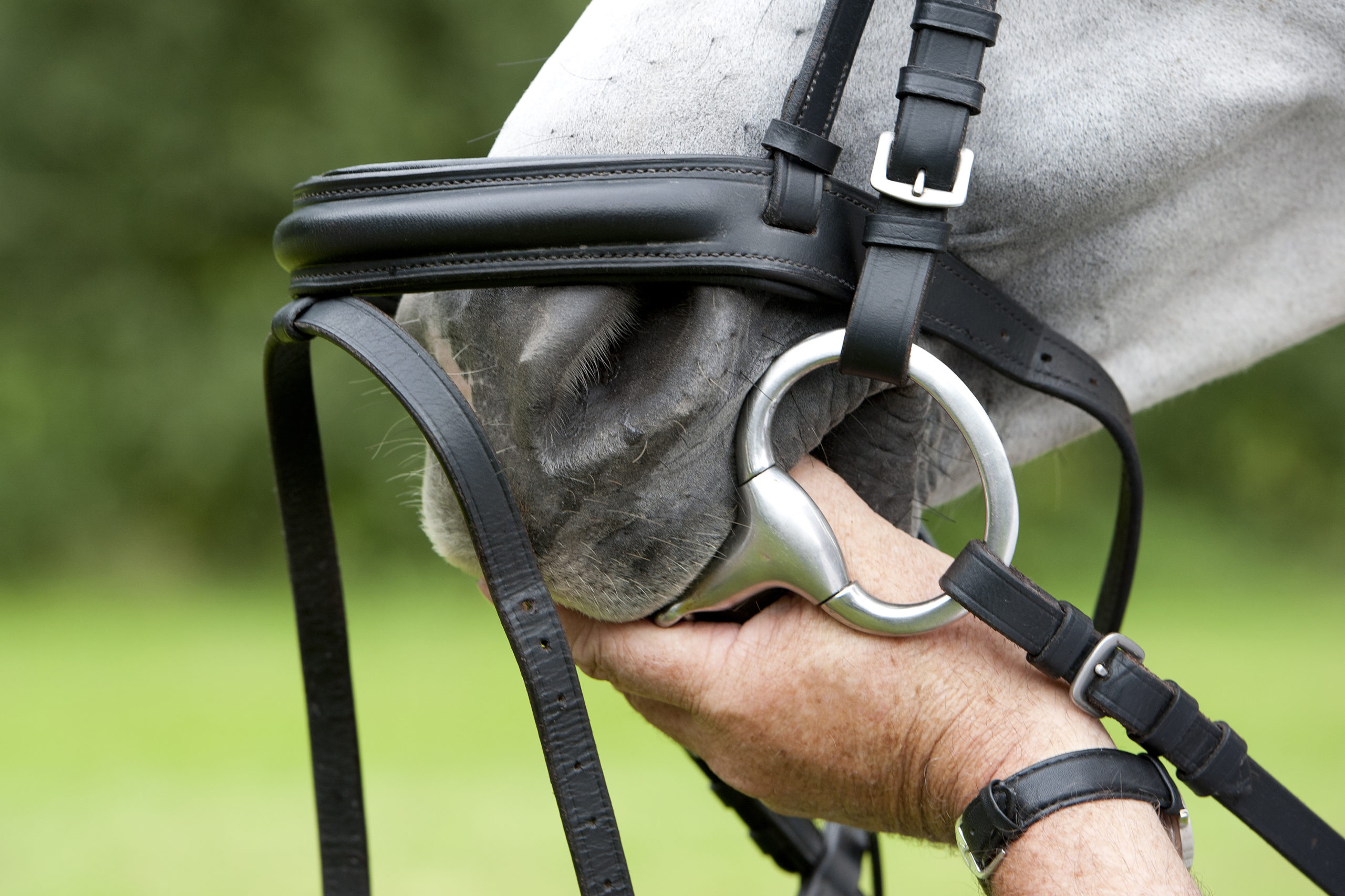 What is the best bit for a young horse?