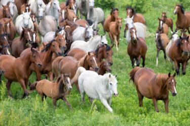 Herd dynamics