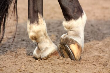 Cracked hooves