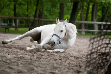 Stretching videos by Ice Man and the SA Lipizzaners
