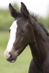 AskHQ: Sizing foals