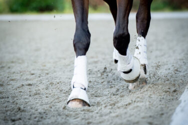 Leg low-down: suspensory ligament injuries