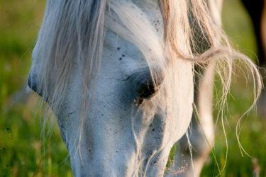 Horse health check: 1) Eyes
