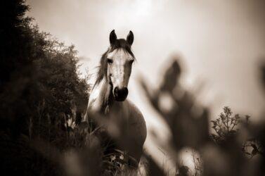 Horse health check: 5) Temperature