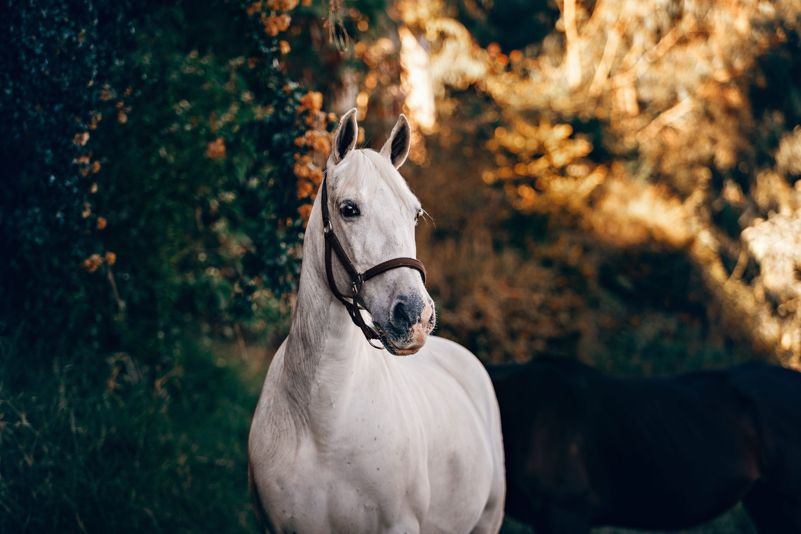 Horses can heal at Riverview Manor
