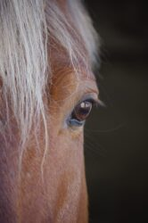 Anatomy 101: The equine eye – from the outside in