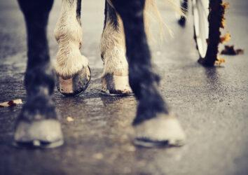 Myth busting: Hoof strength