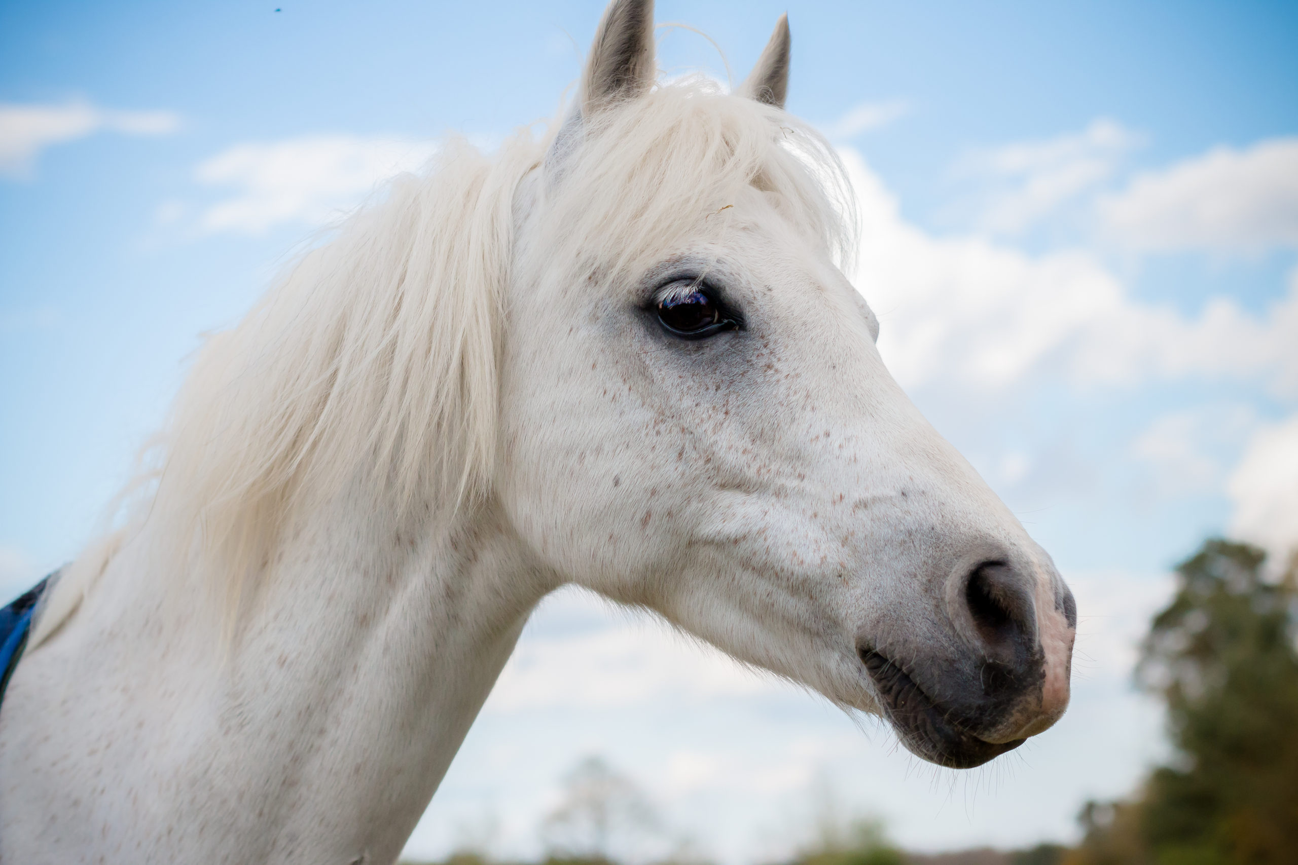 AskHQ: Therapy horses
