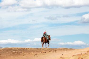 The Basuto Pony