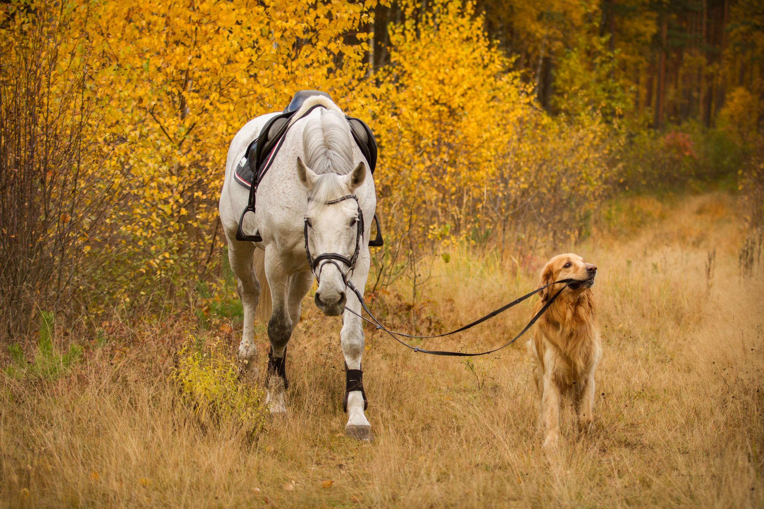 AskHQ: Is a horse smarter than a dog?