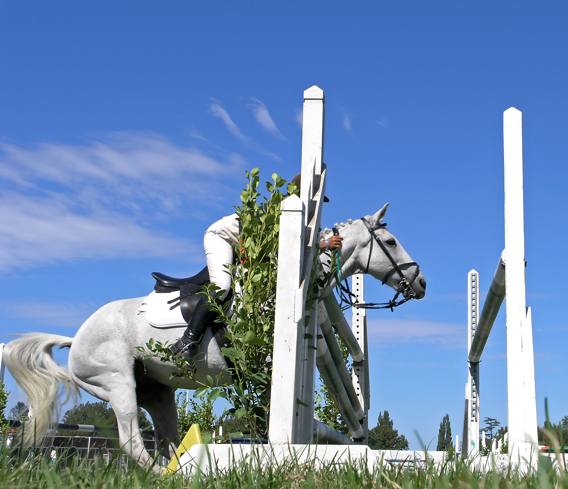 AskHQ: How can I deal with my horse refusing jumps?