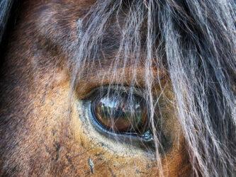 AskHQ: Can horses get PTSD?
