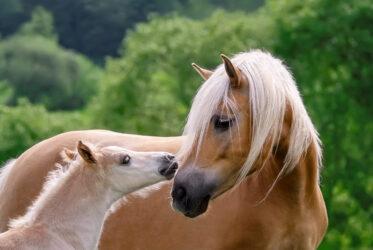AskHQ: A mare's cycle