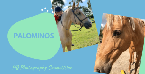 HQ Photography Competition – Palominos