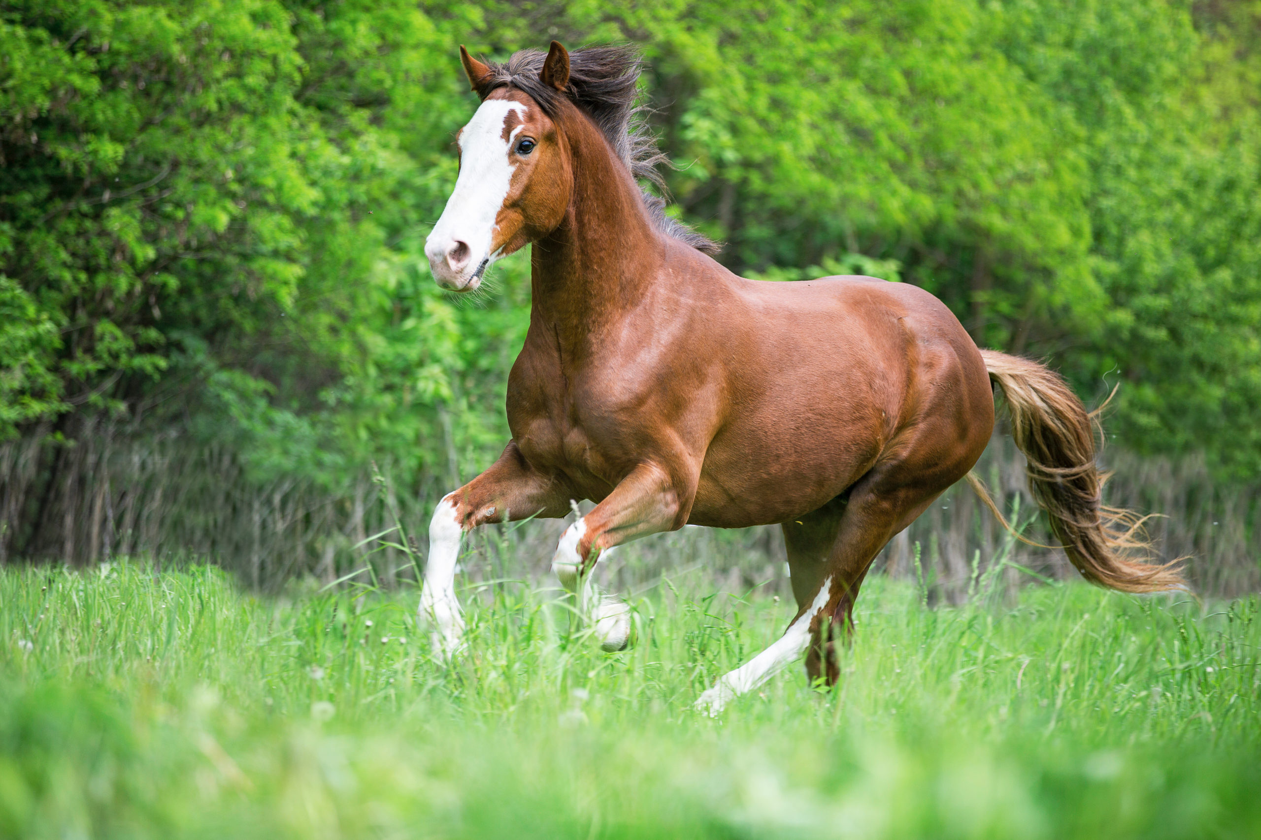AskHQ: What affects semen quality in breeding stallions?