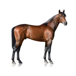 AskHQ: Posture