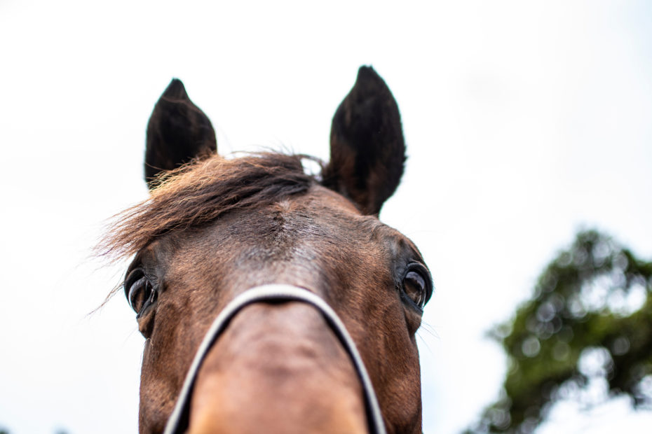 Physiotherapy,Equine,Horses,Treatment,Health