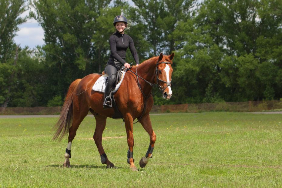 Equestrian,Model,Girl,Riding,Sportive,Dressage,Horse,In,Summer,Fields