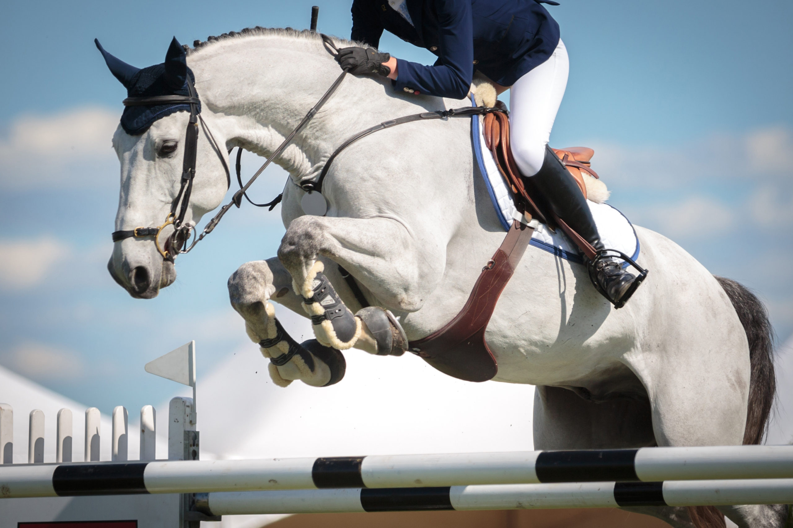 Equestrian,Sports,,Horse,Jumping,,Show,Jumping,,Horse,Riding,Themed,Photo