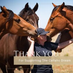 Breeding magic inspires buyers on the closing night of the Callaho Winter Auction