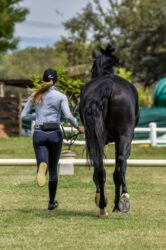 AskHQ: Trot up