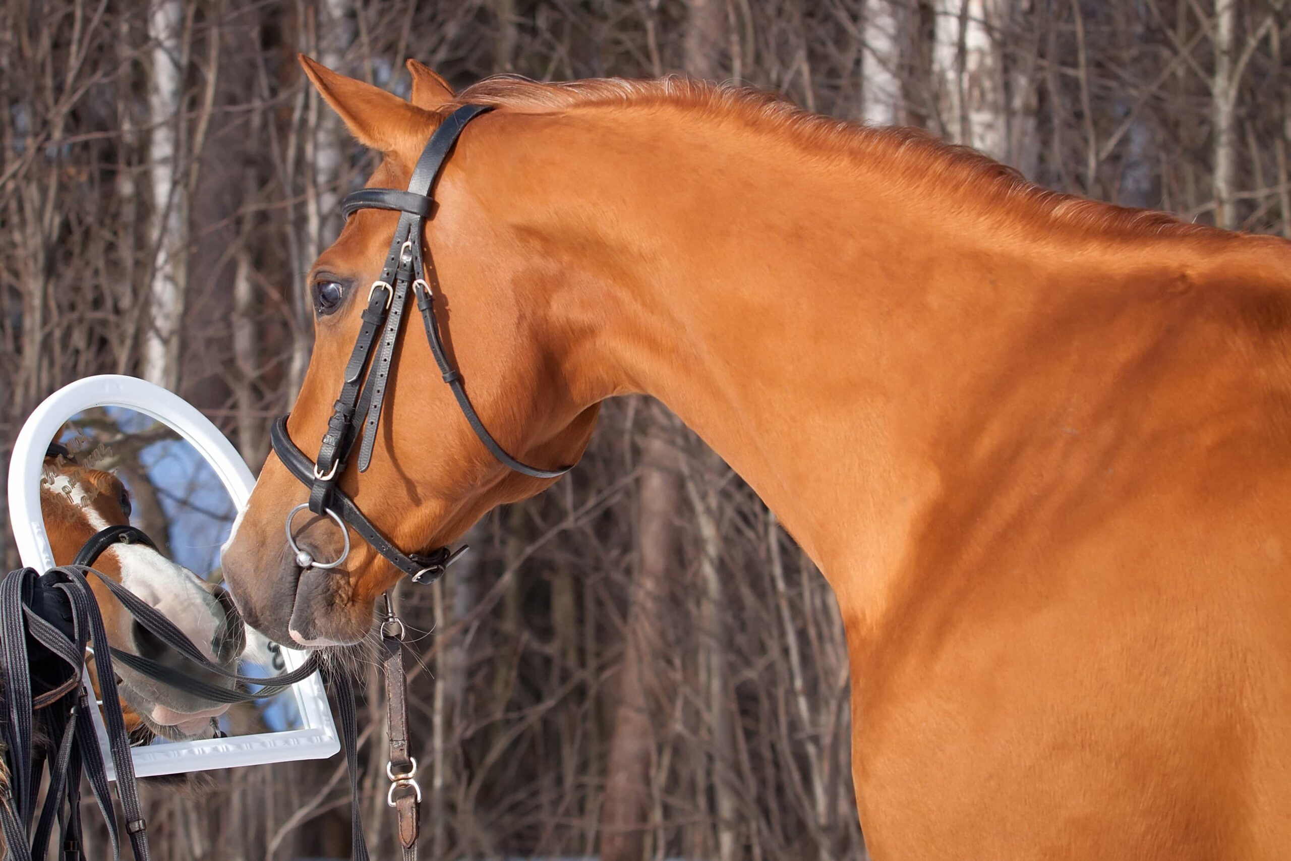 Why horses are so in tune with human emotion