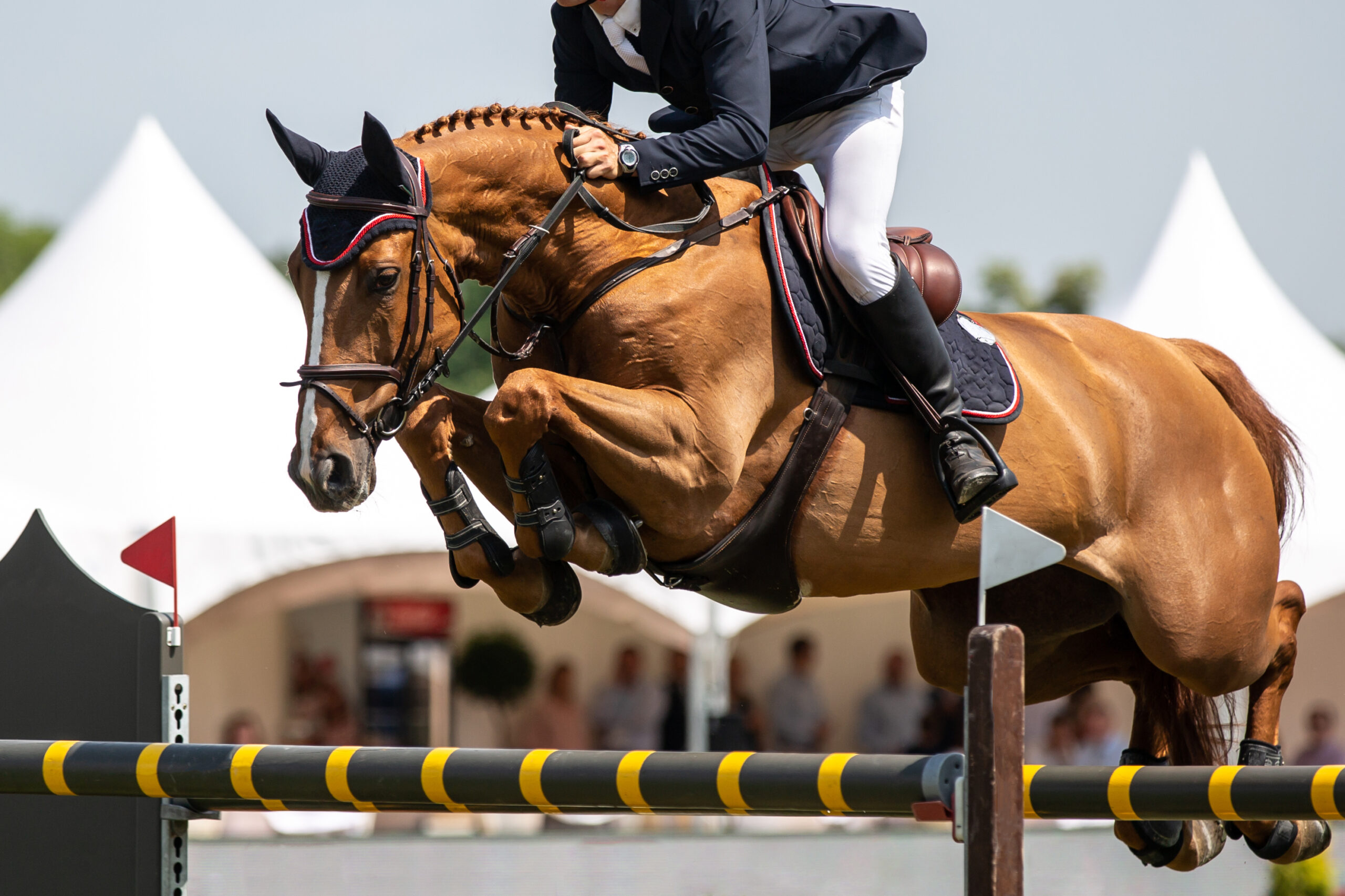 Horse,Jumping,,Equestrian,Sports,,Show,Jumping,Themed,Photo.