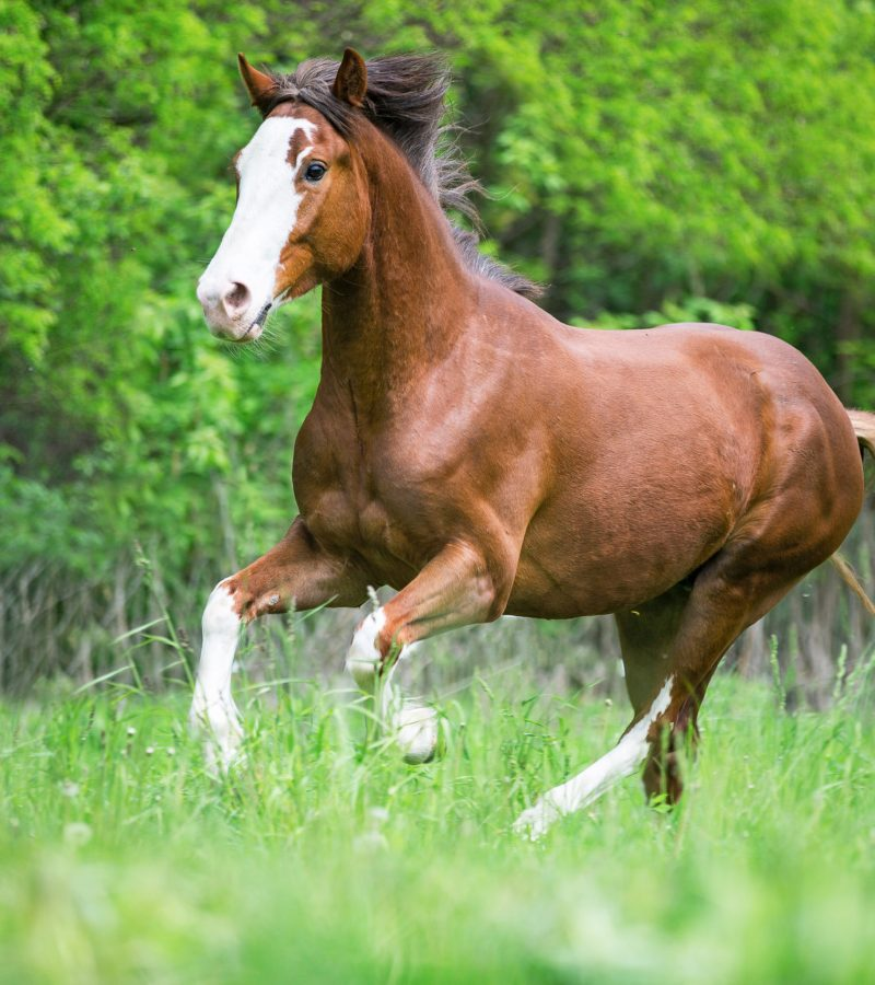 Horse cantering in field